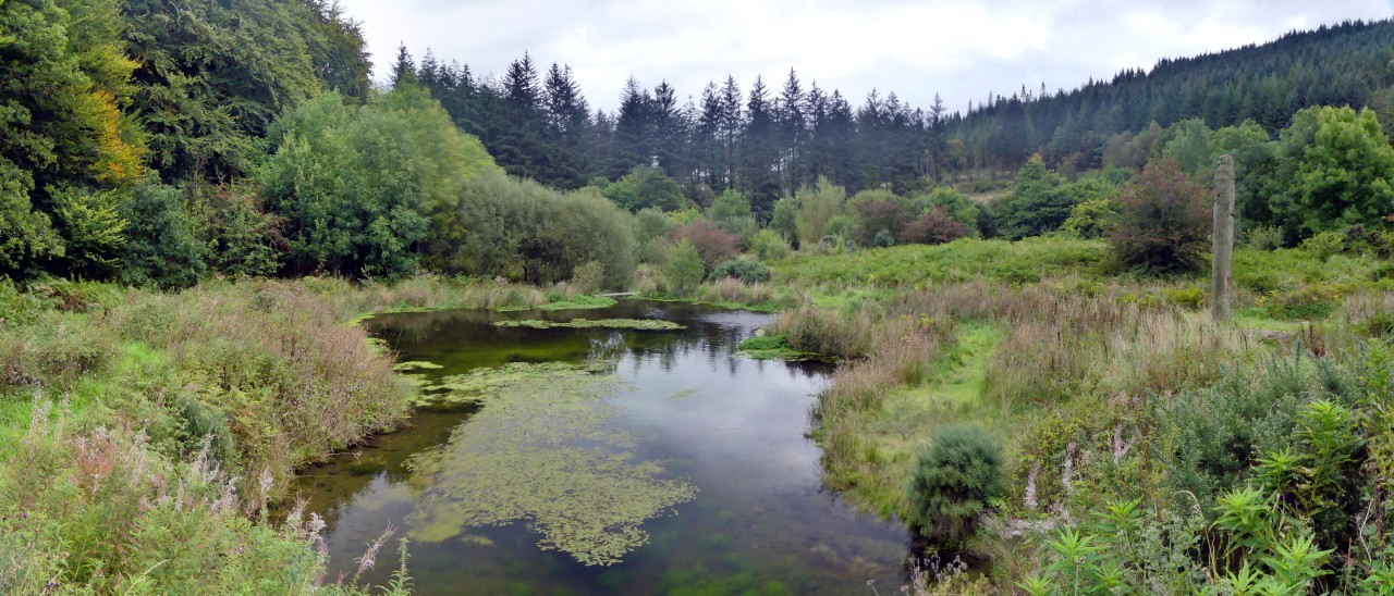 Looking down the the main pond from atop the sand martin bank