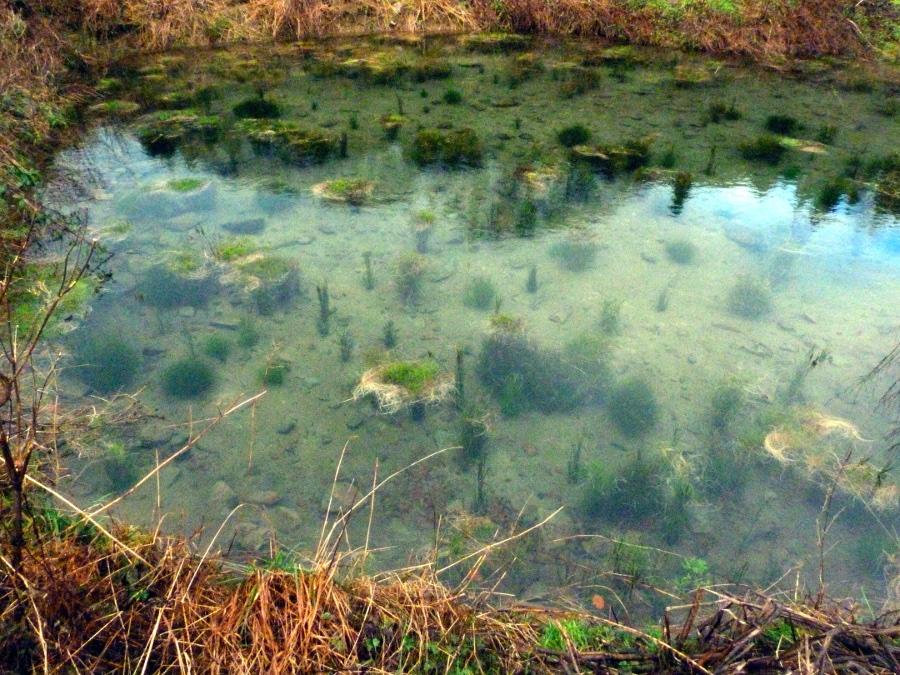 Taliesin wetland developments for Shallow koi pond